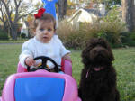 baby and labradoodle puppy